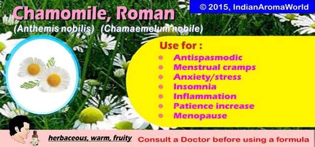 chamomile_roman